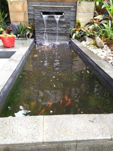 Jual Jasa pemasangan kolam ikan / Kolam ikan hias - Kab. Bogor - Plaza  tanaman | Tokopedia